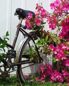 Bike and Azaela