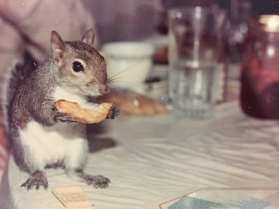 squirrel eats french fry